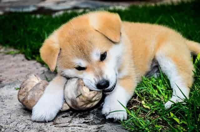 perro hueso aliementos prohibidos